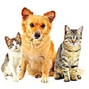 Паразиты у домашних животных