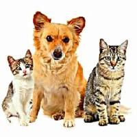 Паразиты у животных