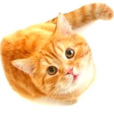 Глисты у кота, признаки
