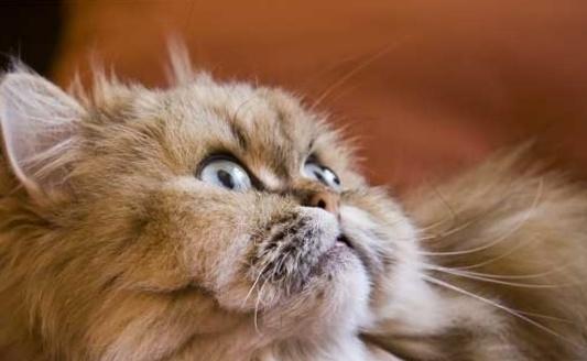 Глисты у кота, симптомы