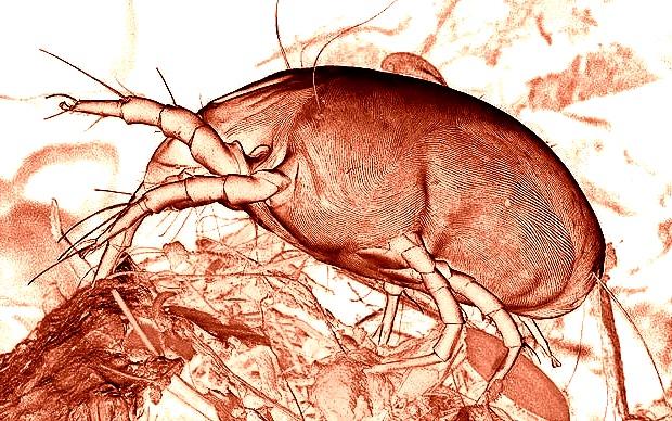нательные паразиты у человека