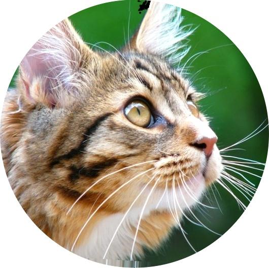 Глисты, фото у кошек