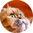 Признаки глистов у кошки