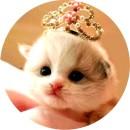 Признаки глистов у котят