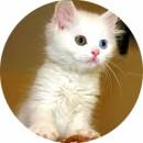 Пирантел котенку