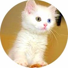 Пирантел кошке