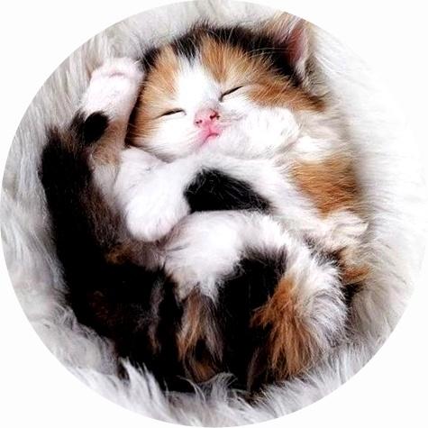 Симптомы глистов у котят
