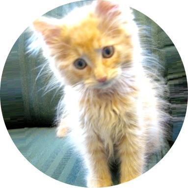 Таблетки для кошки от глистов