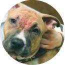 Демодекоз у собаки - симптомы и лечение