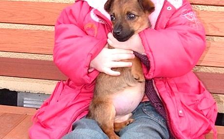 Аскаридоз, глисты у собак, симптомы, лечение, фото